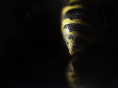 """Week 14 of 52 Theme: """"Chiaroscuro"""" The Business End..."""