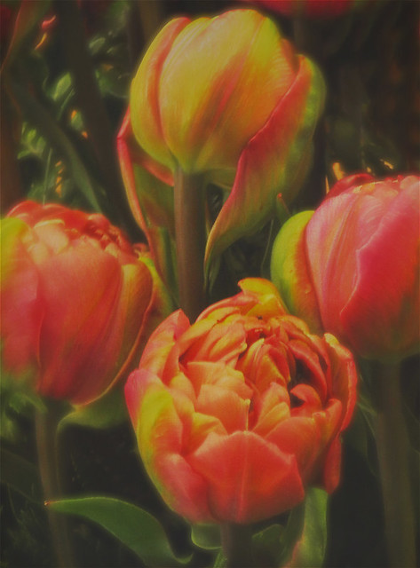 'Lavender Ruffle' tulip transformed in Stackables' Misty formula