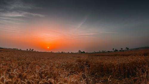 city beautiful field sunrise landscape countryside fields punjab ludhiana ankushthakurphotography ankushthakur lovepunjab punjablove