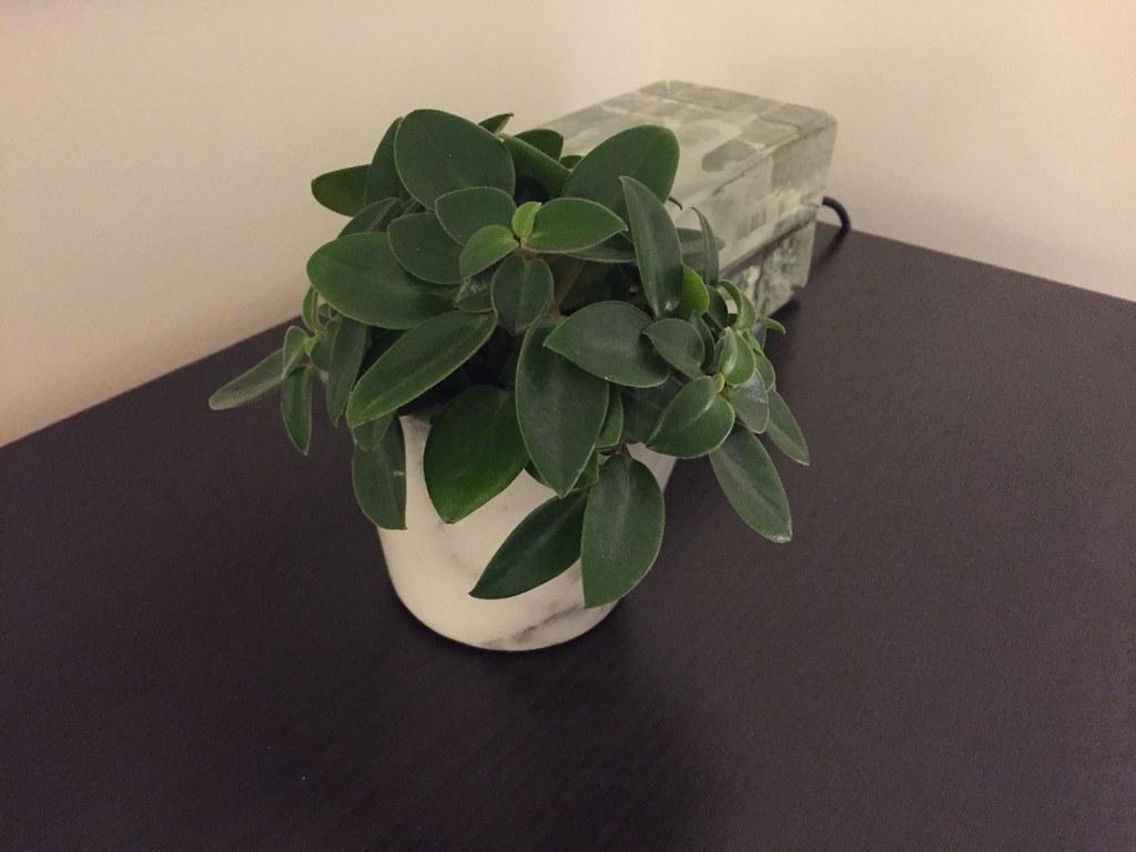 Grön växt i sovrummet