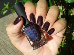 Black Orchid - ILNP
