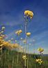 VITORIA-GASTEIZ/yellow beauty
