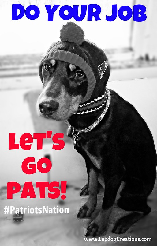Doberman Mix Rescued Puppy wearing New England Patriots Hat #PatriotsNation #DoYourJob #adoptdontshop #PETriots - Lapdog Creations