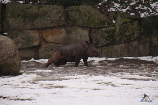 Tierpark Berlin 10.01.2016   0199