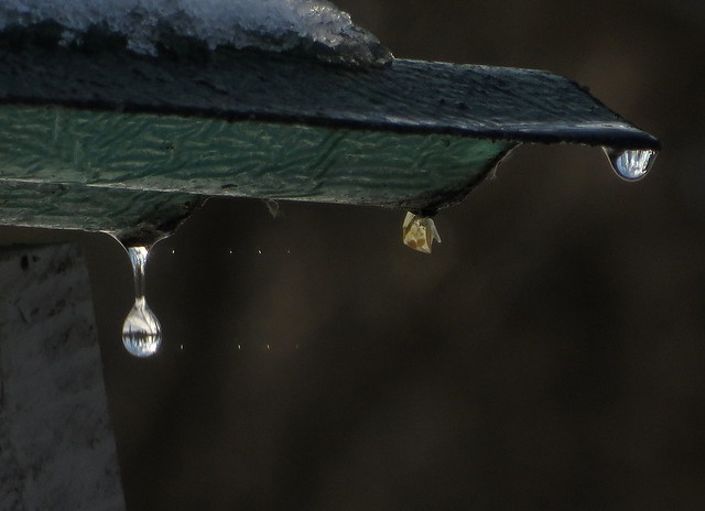 Water Droplets and Sunlight IMG_4986