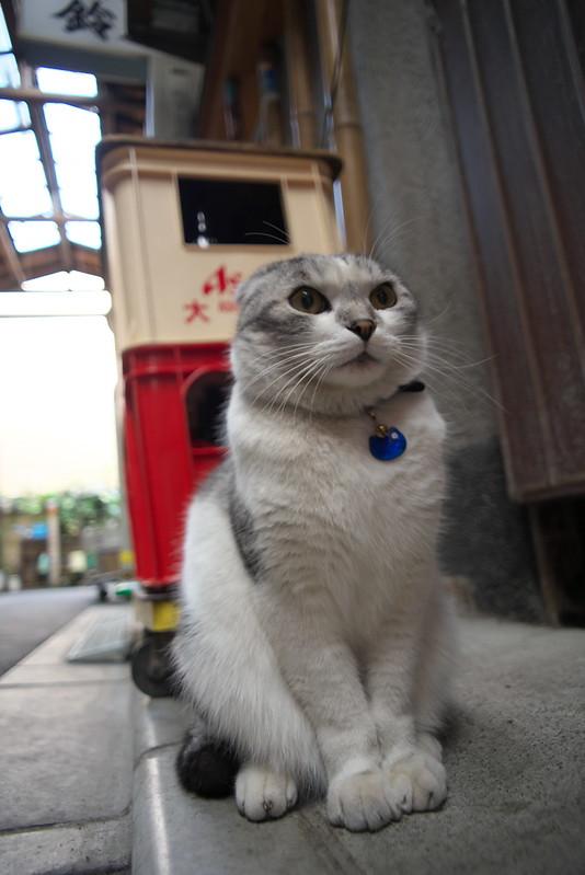 東京路地裏散歩 谷中のネコ 2016年2月13日