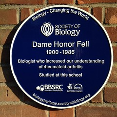 Photo of Honor Fell blue plaque