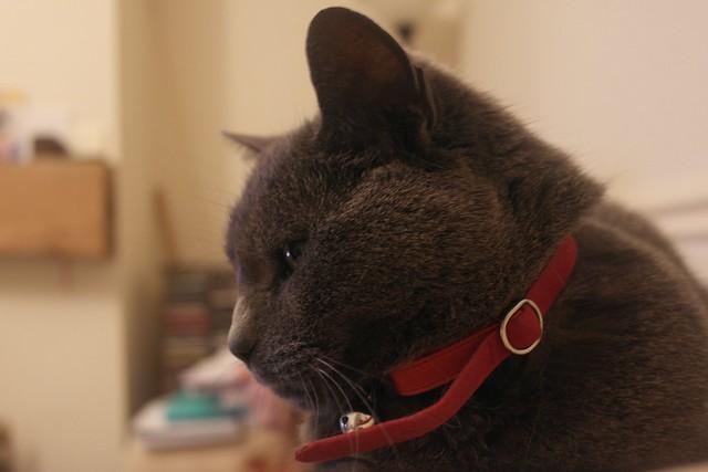 Cat A