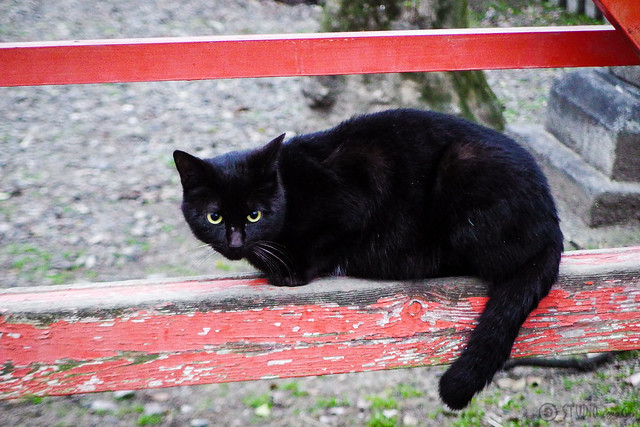 Today's Cat@2016-03-07