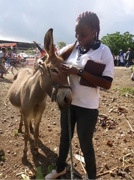 Arusha's newest donkey hero