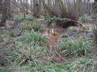 Flitwick Moor