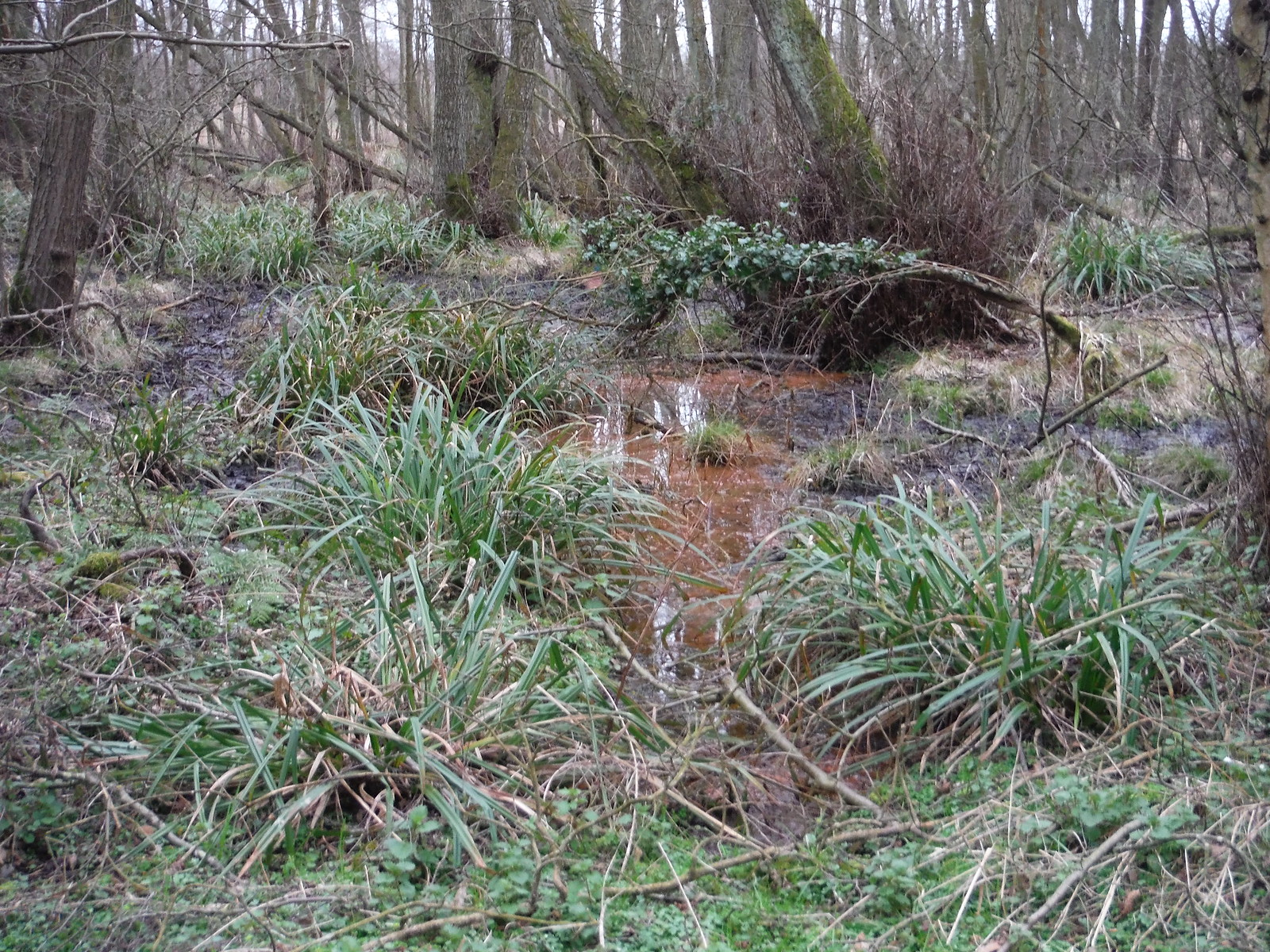 Flitwick Moor SWC Walk 231 Flitwick Circular