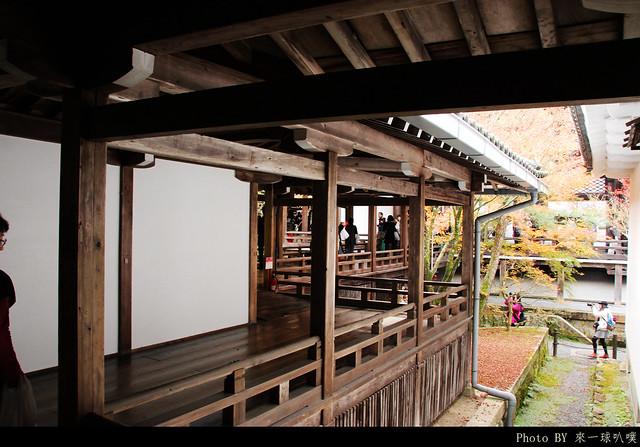 京都-永觀堂111