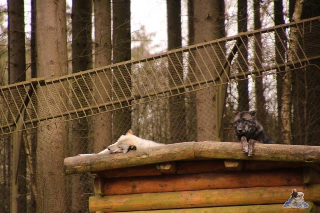 Wildpark Lüneburger Heide 31.03.2016  00225