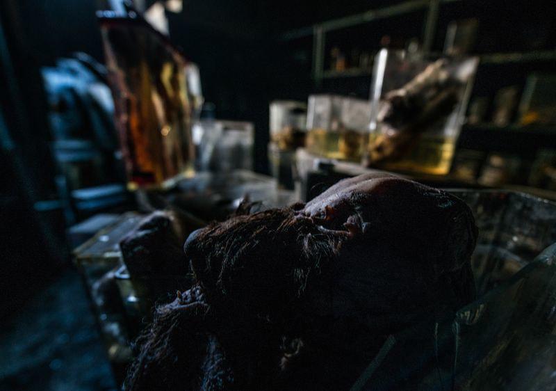 驚魂比利時「廢棄獸醫學院」福馬林的怪誕美學6