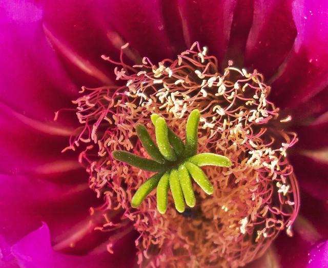 Cactus 2_7D2_120416