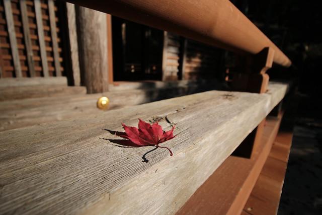 20141122-武奈ヶ岳&京都ライトアップ-0090.jpg