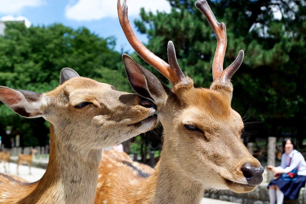 Nara Park_06