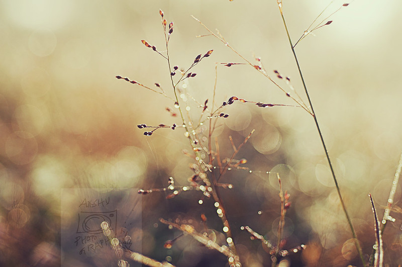 Day 359.365 - Morning Dew