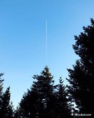 Pine tree & plane // Sapin & avion (Pilat - France) #tree #pinetree #plane #sky #skylovers #skyporn #instasky #blue #pilat #pilatmonparc #loiretourisme #rhonealpes #france #ig_france #igersfrance #digitalnomad #fujifilmx20 #fujifeed #travelphotography #tr