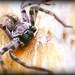 Araña en su habitat - Spider in their habitat by Daroo Photography