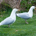 Un par de pájaros