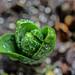 A Sip of Spring by Gabriel FW Koch