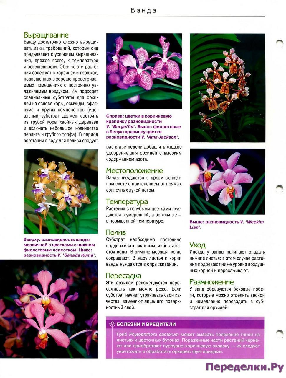 орхидея или фаленопсис - Страница 2 24703333321_b18d152030_o