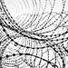 WireSpots.jpg