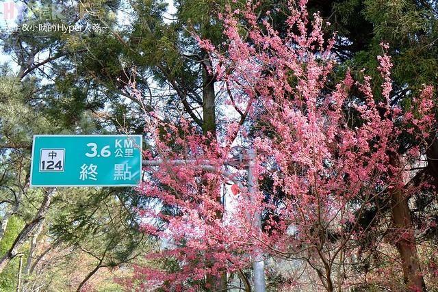 合歡山&武陵農場 (20)
