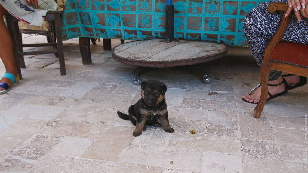 Puppy Dog in Grand Cave Suites, Cappadocia