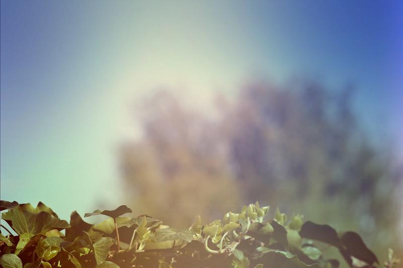 blur-dreamy-texture-texturepalace-82