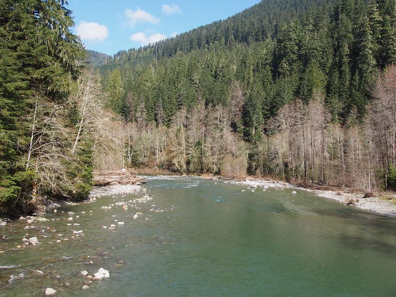 South Fork Stillaguamish River: water forest