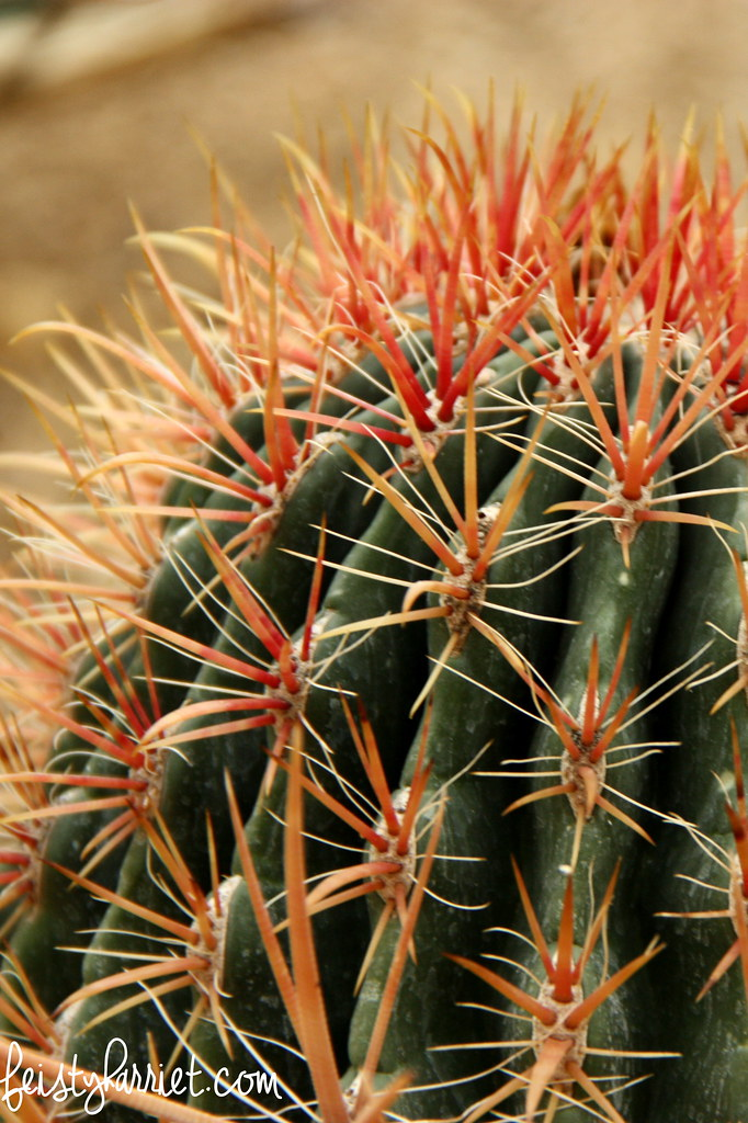 Red spike cactus_feistyharriet_April 2016
