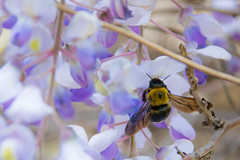 Black Bee on Flower 2