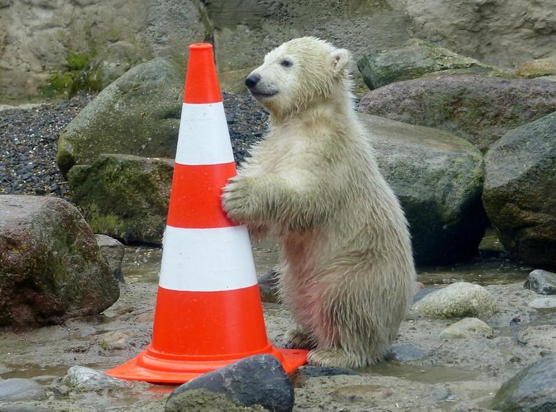 Big Bear ❤