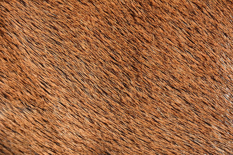 animal-fur-closeup-texturepalace-3