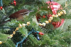 outdoor christmas tree IMG_4748