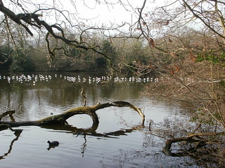 Epping Forest pond trees