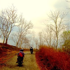 The Never End Journey | Kifu, Kupang, Nusa Tenggara Timur #end #journey #forest #offroad #road #motor #motorcycle #brown #cloudy #cloud #tree