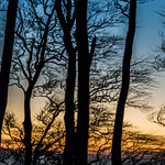 Sunset Blend - Cleeve Hill, Gloucestershire.