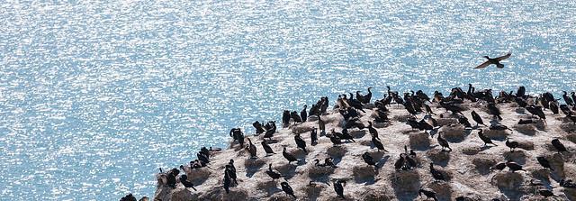 鳥的天地.鳥島