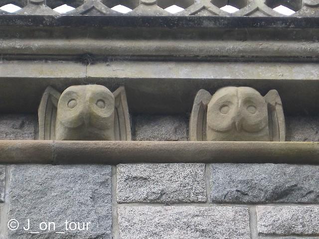 Owls  GJC_IMG_8620