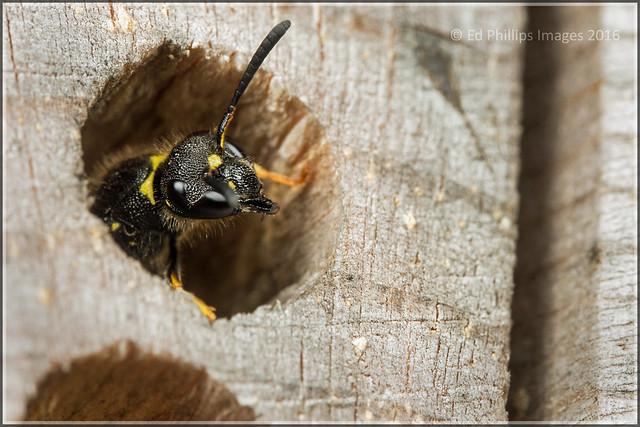 Bee-hotel Emergence