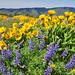 Wildflowers by Just Peachy!