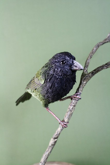 Paper & Wood Black-faced Grassquit