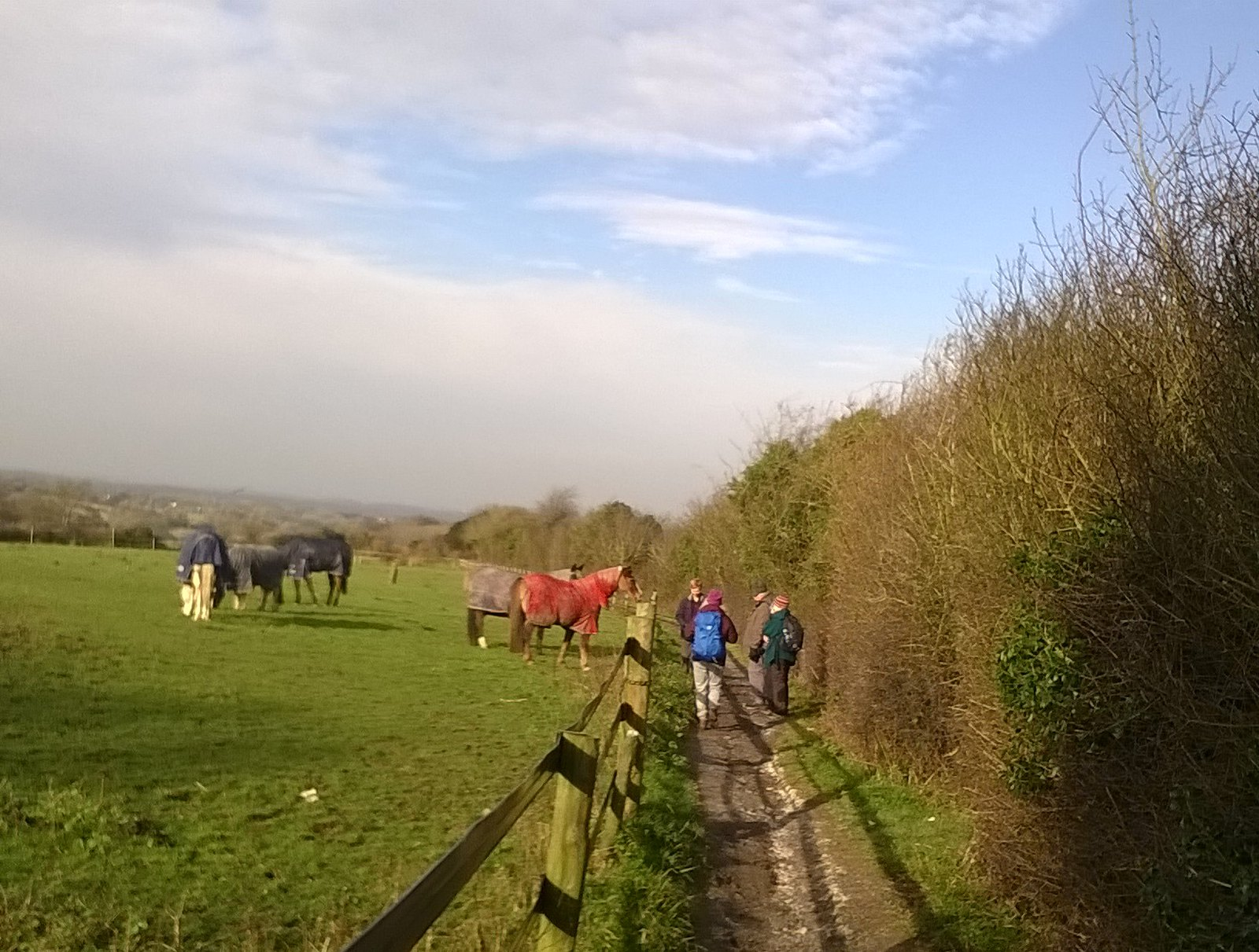Who's the star in the red coat? Walkers meet gallopers near Epsom Downs