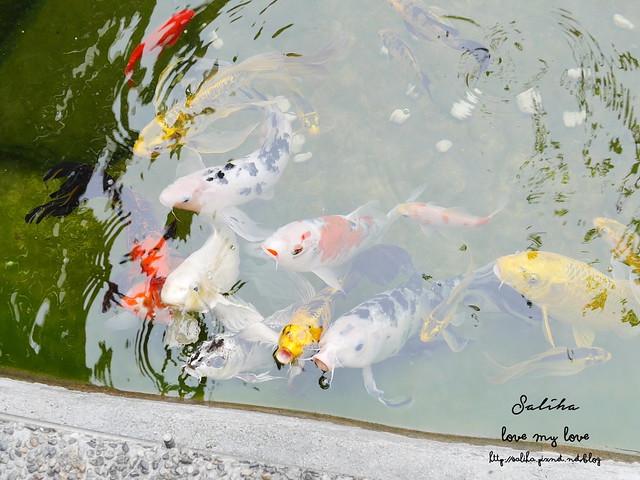 台北一日遊社子島景觀餐廳台北花卉村 (16)