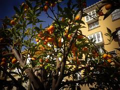 Naranjos in Benalmádena pueblo