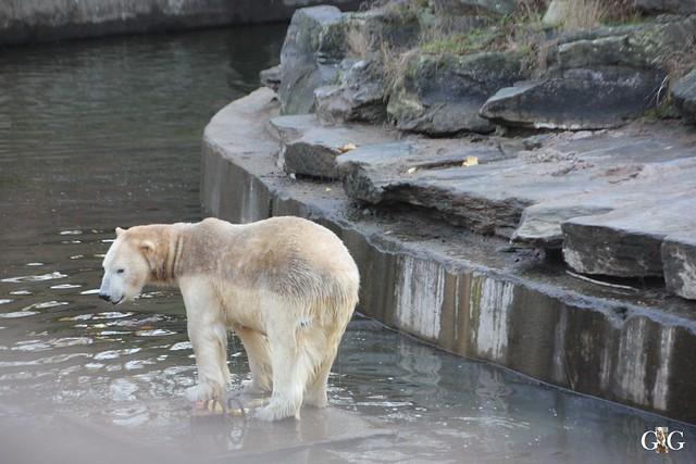 1. Feiertag im Tierpark Berlin3